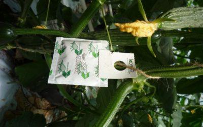 Nützlingseinsatz gegen Schädlinge